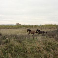 Beautiful Horses, Beautiful Places, Le Far West, Horse Girl, Wild And Free, Insta Photo, Horseback Riding, Farm Life, Land Scape