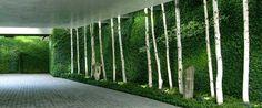 Mur végétal d'extérieur : le nouveau jardin vertical