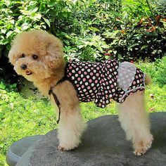 aad8c7e37 Pet Puppy Summer Shirt Small Dog Cat Pet Clothes Vest T Shirt Dress 12  Styles - EXCLUSIVE DEAL! BUY NOW ONLY  6.43