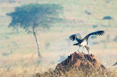 Vogelbeobachtung auf einer Reise nach Uganda