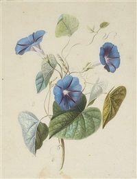 Joseph, Purple Plants, Vintage Botanical Prints, 3 Arts, Global Art, Antique Art, Art Market, Vintage Flowers, Planting Flowers
