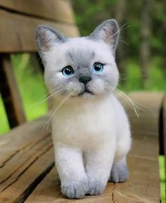 Felt Animals, Animals And Pets, Funny Animals, Kittens Cutest, Cats And Kittens, Cute Cats, Siamese Cats, Beautiful Cats, Animals Beautiful