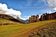 On the way to Swiss National Park from S-chanf. #engadin #graubünden #switzerland #nature #travel by thewanderzest