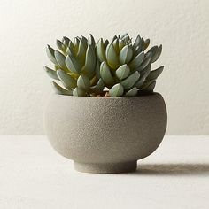 Shop Potted Faux Succulents Textured grey ceramic vase pots a forever-green faux succulent. Brings soothing vibe to any environment and requires zero care. Faux Succulents, Faux Plants, Succulent Pots, Succulent Containers, Container Flowers, Container Plants, Potted Plants, Decorative Planters, Hanging Planters