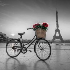 A bicycle with a basket of flowers with the Eiffel tower in the background Canvas Art - Assaf Frank (24 x 24)