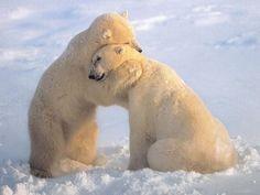 "Polar ""BEAR HUG"""
