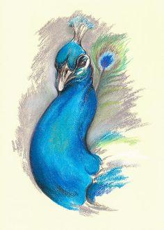 Proud Peacock - pastel artwork by @andersondesigns #peacocks #artprintsforsale