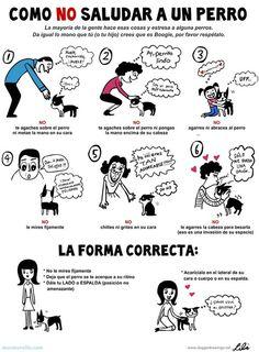 Como saludar a un perro de la forma correcta!  #ColonikCenter #Mascotas #Infografia:
