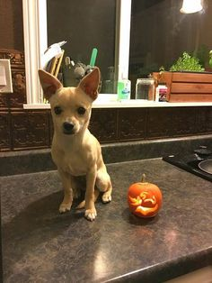Four Paws Rescue helps to connect pets with future owners in Cache Valley.  This little guy is one example of a recent adoption-worthy fellow.
