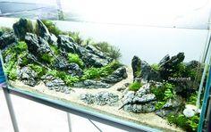 Juge de l'édition 2014, du #CAPA. Diego Marinelli, d'origine Italienne est photographe et aquascapeur. Depuis environ dix ans, il réalise des aquariums plantés, au point d'en devenir l'expert reconnu au niveau international que nous connaissons aujourd'hui. Il a participé à de nombreux concours internationaux d'aquascaping, ce qui lui a apporté régulièrement de très bons classements, ainsi ( et on ne bave pas devant le plamarès) : IAPLC 2007 (plantes aquatiques international Mise concours)…