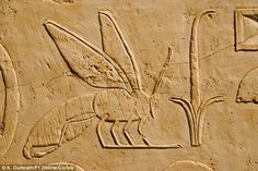 Honeybees are pictured in Egyptian murals and even prehistoric rock art. This image shows a relief on a wall of the Temple of Hatshepsut in Luxor, Egypt