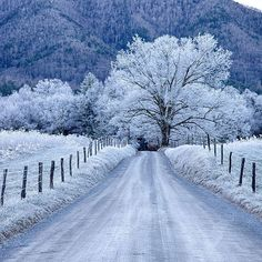 A perfect winter morning at Great Smoky Mountains National Park. This gorgeous shot was taken at GSNP's Sparks Lane in Cades Cove. Photo by Christopher Ewing (www.sharetheexperience.org).