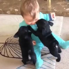 New trending GIF on Giphy. baby puppy showered kissessource. Follow Me CooliPhone6Case on Twitter Facebook Google Instagram LinkedIn Blogger Tumblr Youtube