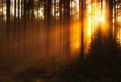 "Mushroom hunting at autumn in a untamed forest – ""sunrays"" by Joni Niemelä"