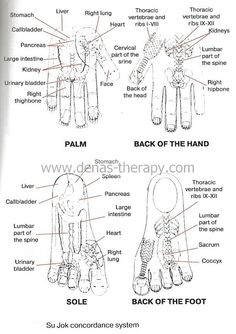 Visit our website www.denas-therapy… Su Jok Concordance Zones on hands and feet. in elderly and obese people, children treatment of Su Jok Concordance zones yield even better results than the treatment of direct projection of complaint. Types Of Cooking Oil, Hand Reflexology, Chromotherapy, Acupressure Points, Traditional Chinese Medicine, Alternative Medicine, Health Problems, Hands, Visit Website