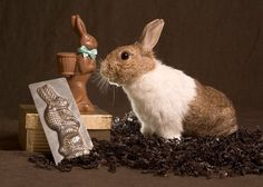 Even Better than the Real Thing? 8 Reasons to Choose a Chocolate Bunny This Easter