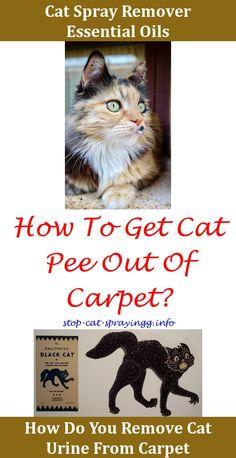 Best 25 Cat Urine Ideas On Pinterest Spotted Dog Image