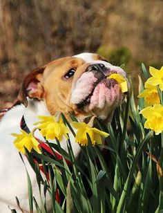 Smell the flowers, heck, I'll eat them