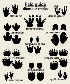 Dinosaur Field Guide Series Poster set of 3 include the dinosaur art poster, dinosaur tracks print and the dinosaur map print. All 3 make a perfect addition to a dinosaur nursery, or any nature themed room. Perfect for kids also. Dinosaurs Preschool, Dinosaur Activities, Dinosaur Projects, Dinosaur Crafts Kids, Dinosaurs For Kids, Dinosaur Decorations, Dino Craft, Dinosaur Kids Room, Dinosaur Room Decor