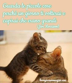 ********Look at the little things because one day you will turn and you will understand that they are great Cute Cats And Dogs, I Love Cats, Dog Love, Animals And Pets, Celine, Italian Quotes, Spiritual Thoughts, Wish Quotes, Jim Morrison