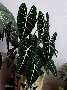Indoor Gardens For Your Home Untitled