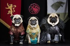 "A Couple Have Recreated ""Game Of Thrones"" With Their Pugs And It's Magnificent"