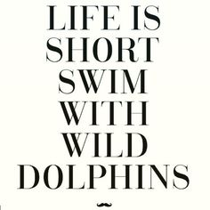 Life is short Swim with wild dolphins