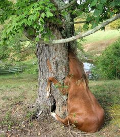 funny horses | This picture saw hosts of horse at one morning. Poor animal stuck in ...