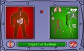 All Systems are Go!   In this online activity, a fictional character named Arnold is missing a number of body parts. You are presented with a body system and a variety of organs. You should drag and drop all the organs that belong in that particular body system to Arnold's body. Once all four systems are complete, a clothed Arnold will appear.