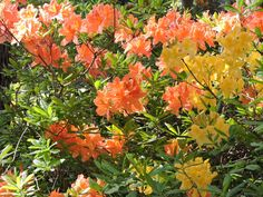 Rhododendron Park, Helsinki, Finland, Plants, Painting, Art, Craft Art, Paintings, Kunst