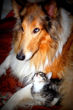 Kittens first night in a new home Photo by Adrian Miller -- National Geographic Your Shot