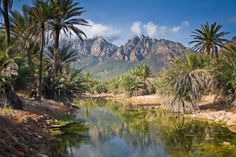 Around 700 species) is endemic to Socotra Island. Therefore, Socotra Island is considered to be the most alien place on Earth. Socotra, Green Landscape, Nature Images, Cool Places To Visit, Tourism, Beautiful Places, National Parks, Scenery, Morocco