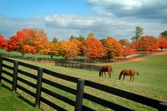 Kentucky Horse Farm in the fall! https://www.facebook.com/photo.php?fbid=280987682005136&set=a.201870623250176.36703.196223970481508&type=1&theater