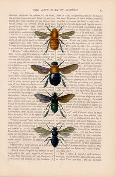 honey bees honeybees dictionary art vintage insect BEES print - vintage art book page print - honey bees dictionary art. $9.00, via Etsy.
