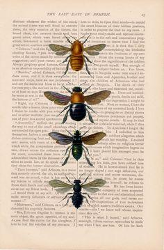 dictionary art vintage insect BEES print - vintage art book page print - unique art