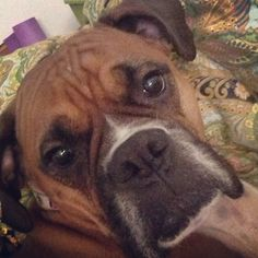 What a sweet face, Love Boxers