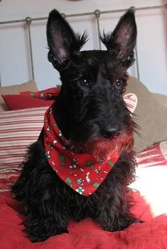 She's known as Sophie the Scottie Dog.  I think she's perfect for the role......