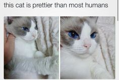 Funny Animal Pictures - View our collection of cute and funny pet videos and pics. New funny animal pictures and videos submitted daily. Cute Animal Memes, Funny Animal Pictures, Cute Funny Animals, Funny Cats, Pretty Cats, Beautiful Cats, Animals Beautiful, Pretty Kitty, Gorgeous Eyes