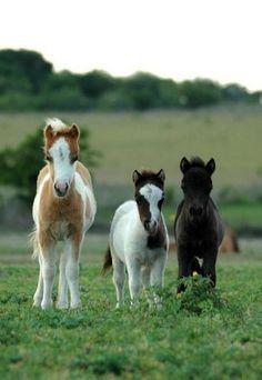 Cute little horse friends.