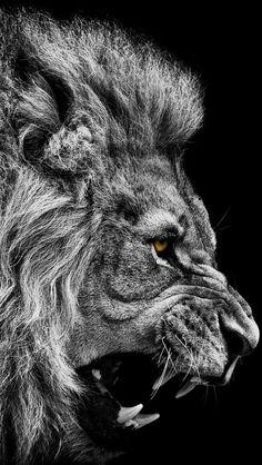 Lion's Roar: