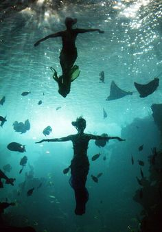 """Divers dressed as mermaids perform at an aquarium at the Guangzhou Ocean World on August 3, 2005 in Guangzhou of Guangdong Province, south China. The """"Mermaid Show"""" is one of most popular entertainments at the theme park, drawing a lot of tourists."""