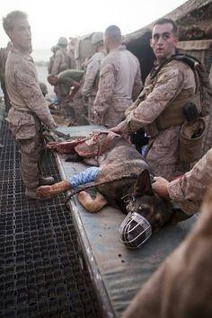Taking care of a fallen hero
