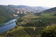 São João da Pesqueira, the Heart of the Douro Valley - by Brendan Harding for NCarvalheiro 01.06.2015 | Among the vineyard covered hills of the Douro Valley in Portugal's far north, there is a saying which goes, 'You are greeted as a visitor, but will leave as a friend'. This, I can testify, is true.