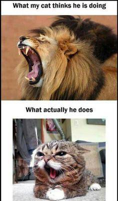 Top Laughing So Hard Cat Memes & Grumpy Cat Memes 12 Days Of Christmas Cute Animal Memes, Funny Animal Quotes, Animal Jokes, Cute Funny Animals, Funny Quotes, Cat Quotes, Life Quotes, Animal Memes Clean, Animal Captions