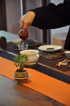 Chinese tea ceremony Green Tea Vs Coffee, Chinese Theme Parties, Tea Table Settings, Tea Facts, Tea Culture, Japanese Tea Ceremony, Fun Cup, Chinese Tea, My Cup Of Tea
