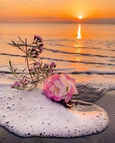 Twitter Beautiful Profile Pictures, Cool Pictures Of Nature, Colorful Pictures, Wallpaper Nature Flowers, Flower Backgrounds, Flowers Nature, Floral Wallpaper Iphone, Rose Gold Wallpaper, Cute Images For Dp