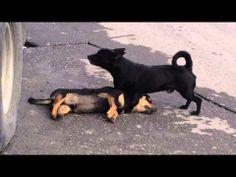 Perro intenta revivir a su amigo