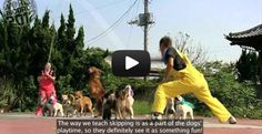 Check-Out these jump roping dogs in Japan!