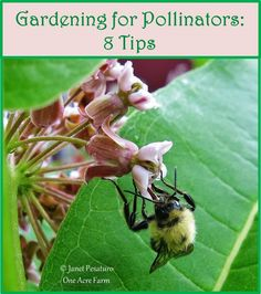 8 Tips for Gardening for Pollinators - Supporting pollinators helps you achieve higher fruit and vegetable yields! Gardening For Beginners, Gardening Tips, Organic Gardening, Farm Gardens, Outdoor Gardens, Planting Flowers, Flower Gardening, Planting Seeds, Beneficial Insects