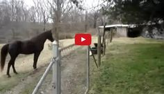 This Horse And Dog Are Absolutely CRAZY! Wait Till You See What They're Doing…
